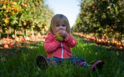 Naponta egy alma…